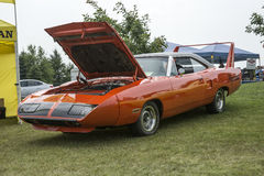 Superbird Royalty Free Stock Images