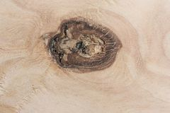 Plywood with a beautiful knot resembling the pupil of the eye. royalty free stock image