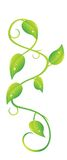 pnąca roślina Obraz Stock