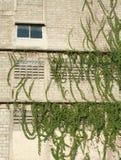 Pnąca roślina na nagim budynku fotografia stock