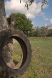 Pneu contre le tronc d'arbre Images stock