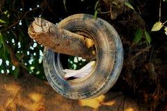 Pneumático velho pendurado no ramo de árvore imagem de stock royalty free