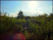 Pneus 4 Photos libres de droits