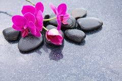 Pnk orchidei i czarnych kamieni zamknięty up Obraz Stock