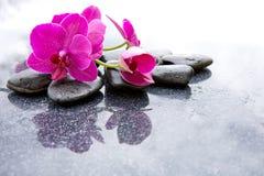Pnk orchidei i czarnych kamieni zamknięty up Fotografia Stock