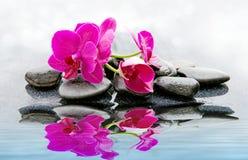 Pnk orchidei i czarnych kamieni zamknięty up Zdjęcie Stock
