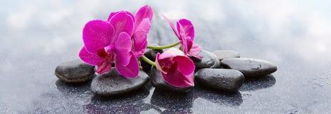 Pnk orchidei i czarnych kamieni zamknięty up Fotografia Royalty Free