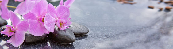 Pnk orchidei i czarnych kamieni zamknięty up Obrazy Stock