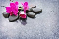 Pnk orchidei i czarnych kamieni zamknięty up Zdjęcia Royalty Free