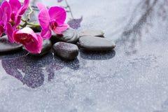 Pnk orchidei i czarnych kamieni zamknięty up Obrazy Royalty Free