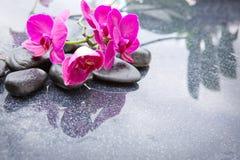 Pnk orchidei i czarnych kamieni zamknięty up Zdjęcia Stock