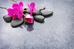 Pnk orchids and black stones close up. Royalty Free Stock Photos