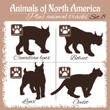 Północna Ameryka zwierzęta i zwierzęcy ślada, odciski stopy Zdjęcie Stock