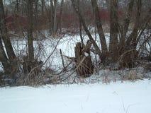 Pnond congelado con los árboles alrededor de él Imagen de archivo