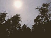 PNW-horisonter I Royaltyfria Bilder