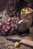 Poção do elixir das ervas Foto de Stock