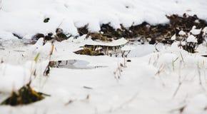 Poça congelada Imagens de Stock