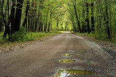 Poças, estrada secundária, mola Fotos de Stock Royalty Free