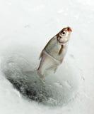 połów zima Zdjęcia Royalty Free