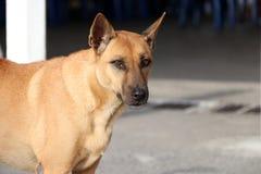 Połówka brązu psa pozycja na świetle słonecznym obraz royalty free