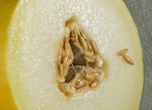 Połówka honeydraw melon fotografia stock