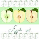 Połówka zielony jabłko, połówka czerwony jabłko i połówka żółty jabłczany wektoru set, Zdjęcia Stock