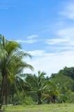 położenia palmowy drzewo Fotografia Royalty Free