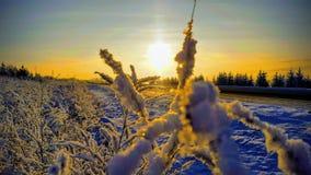 Położenia słońce przez gałąź Bush zdjęcie royalty free