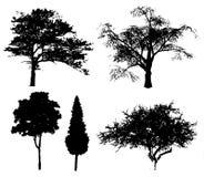 położenie drzew. ilustracja wektor