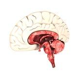 połowa mózgu ilustracji