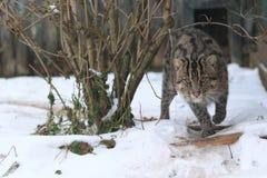 Połowu kot Fotografia Stock