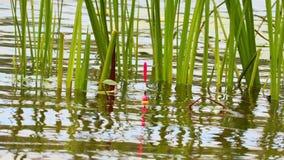 Połowu prącia pławik w wodzie przy trawą zbiory