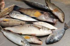połowu złapany rybi słup Obraz Stock