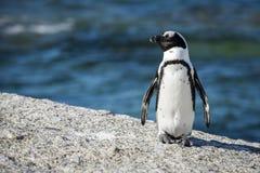 Południe - afrykański pingwin przy głaz plażą, Południowa Afryka Zdjęcia Royalty Free