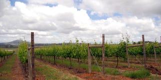 Południe - afrykański winnica Zdjęcia Royalty Free