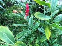 Południe - amerykański dżungla kwiat Fotografia Royalty Free