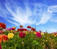 Południe Izrael, letni dzień 2007 pozdrowienia karty szczęśliwych nowego roku Malowniczy barwiący ogrodowi jaskiery i chmur pierz fotografia stock