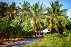 Południe Plażowy drzewko palmowe Zakrywająca aleja Obraz Stock