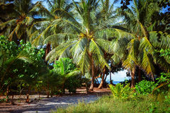 Południe Plażowy drzewko palmowe Zakrywająca aleja Zdjęcia Stock