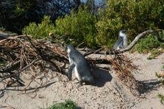 Południowa Afryka Capetown, stołowy halny seashore Obrazy Stock