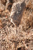 Południowa Afryka pająka sieć Obrazy Royalty Free