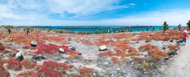 Południowa plac wyspa fotografia royalty free