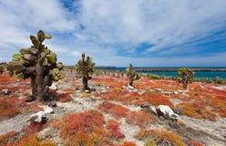 Południowa plac wyspa Obraz Royalty Free