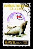 Południowa słoń foka, Antartic eksploracja (Mirounga leonina) obraz stock