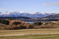 Południowej wyspy krajobraz, Nowa Zelandia zdjęcie royalty free
