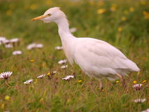 Południowi afrykańscy ptaki Fotografia Stock