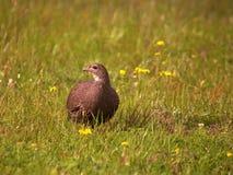 Południowi afrykańscy ptaki Zdjęcie Stock