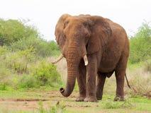 Południowi afrykańscy zwierzęta Zdjęcie Stock