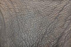 Południowy białej nosorożec Ceratotherium simum simum Zdjęcia Royalty Free