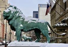 Południowy lew w śniegu, fotografia stock